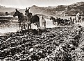 Picture Title -  Ploughing