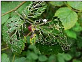 Picture Title - green nibbled leaf
