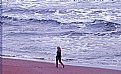 Picture Title - Beach & Visitors