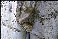 Picture Title - the tree-eunuch