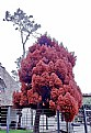 Picture Title - Odd Tree