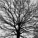 Picture Title - empty tree