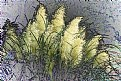 Picture Title - Pampas Grass