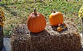 Picture Title - Fall Yard Decorating