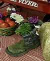 Picture Title - Boot Plant