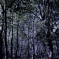 Picture Title - in the woods