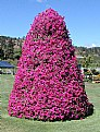 Picture Title - Petunia Tree