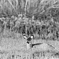 Picture Title - Doe, a deer...