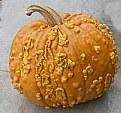 Picture Title - Pumpkin