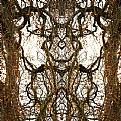Picture Title - ornament