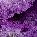 Picture Title - Purple Flower