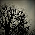 Picture Title - bare trees