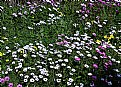 Picture Title - Flower Bed