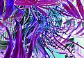 Picture Title - Floral Abstract