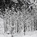 Picture Title - winterwald