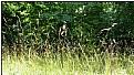 Picture Title - summergrasses
