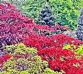 Picture Title - Colour & Trees