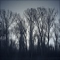 Picture Title - shivering trees
