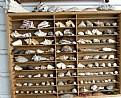 Picture Title - Shell collection