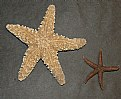Picture Title - Starfish
