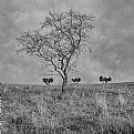 Picture Title - Four trees