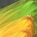 Picture Title - green-yellow