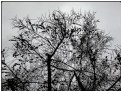 Picture Title - wintertwig still