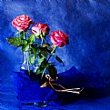 Picture Title - roses and blue