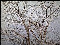 Picture Title - wind bush