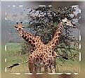 Picture Title - Akagera National Park- Rwanda