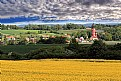 Picture Title - Rapeseed field.