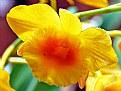 Picture Title - Flower Encore