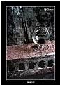Picture Title - Nightcap