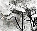 Picture Title - Bird in The Garden