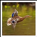 Picture Title - **Morning Fly   III**