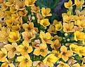 Picture Title - Floral Sunshine