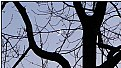 Picture Title - the moon in the branches