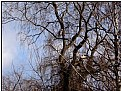 Picture Title - egrets' tree