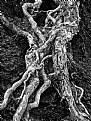 Picture Title - Rooted