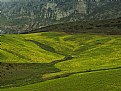 Picture Title -  Sunlit Fields