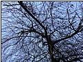 Picture Title - lenten tree