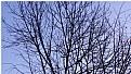 Picture Title - lenten tree 2