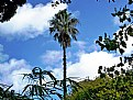 Picture Title - Palm Tree & Friends
