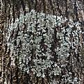 Picture Title - lichen