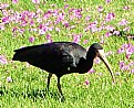 Picture Title - Bird & Flowers