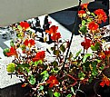 Picture Title - Flowers in Balcony
