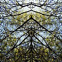 Picture Title - spring birch