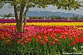 Picture Title - Surrounded by Color
