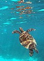 Picture Title - Turtle