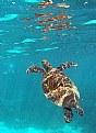 Picture Title - Turtle